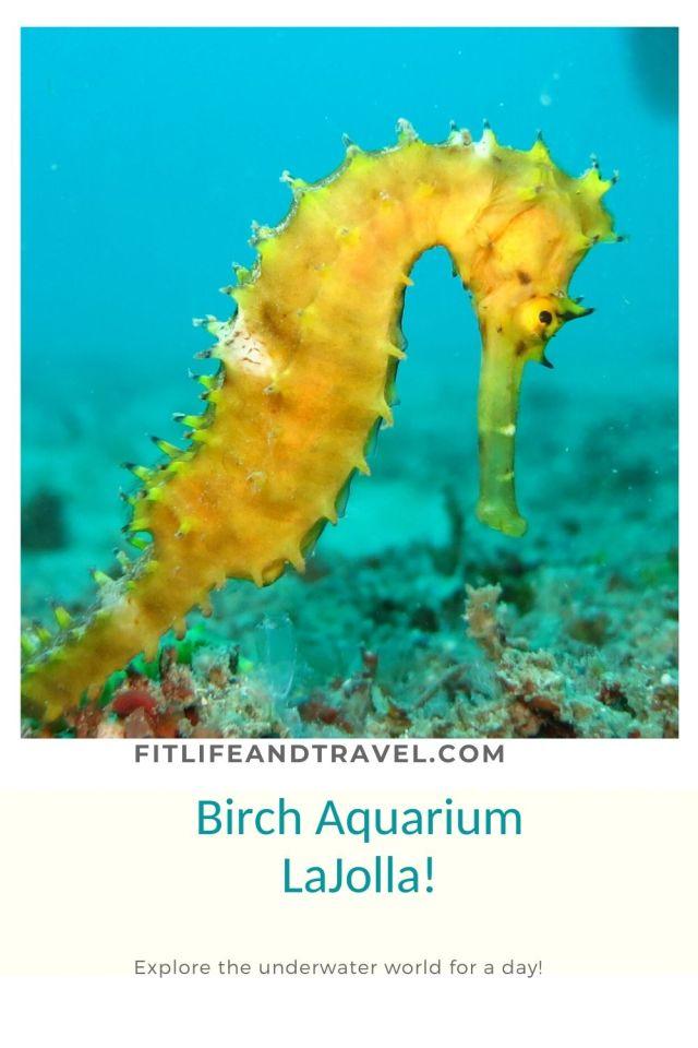 Birch Aquarium La Jolla California