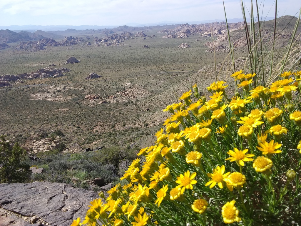 Wildflowers on Ryan Mountain Trail