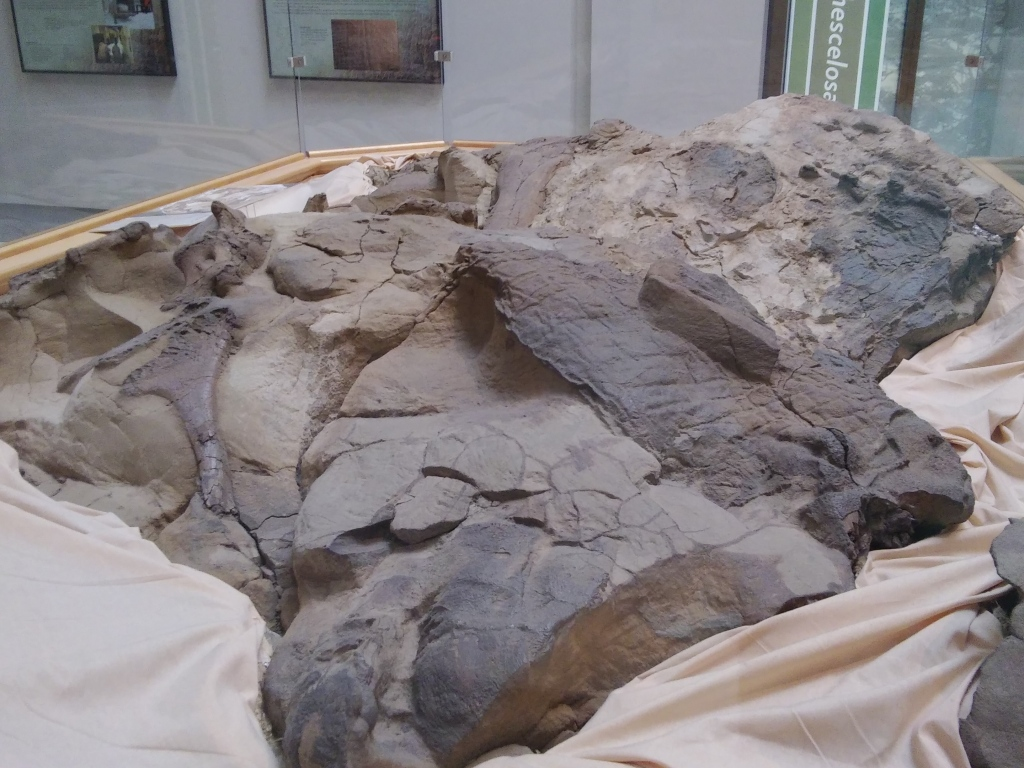 mummified Duck Billed Hadrosaur