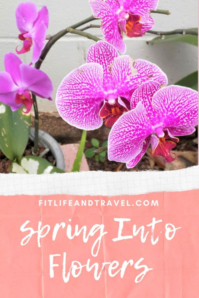 Spring into Flowers! A Blooming Photo Journal