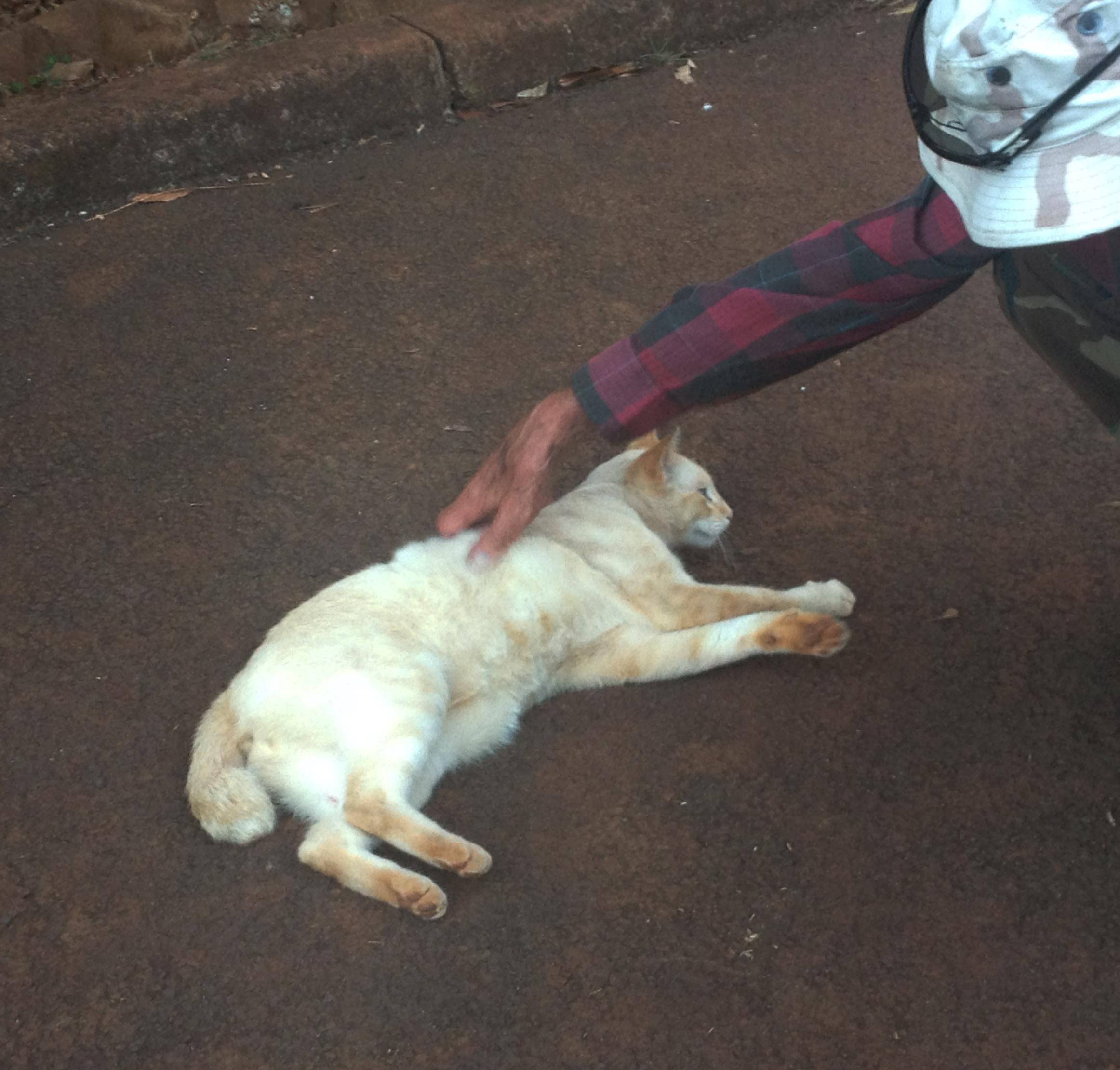 IMG_5568 cat