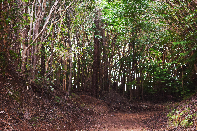 Tree tunnels on Wiliwilinui Ridge Trail. Hiking Hawaii. FitlifeandTravel.com