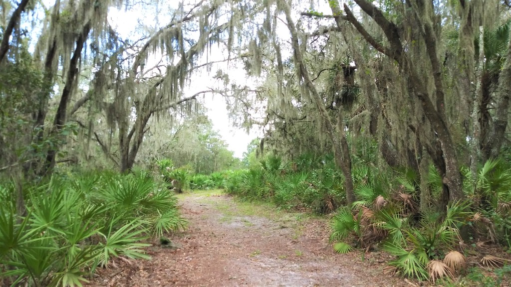 Best Parks | Beaches to Visit on Florida's Central Gulf Coast  FitlifeandTravel.com