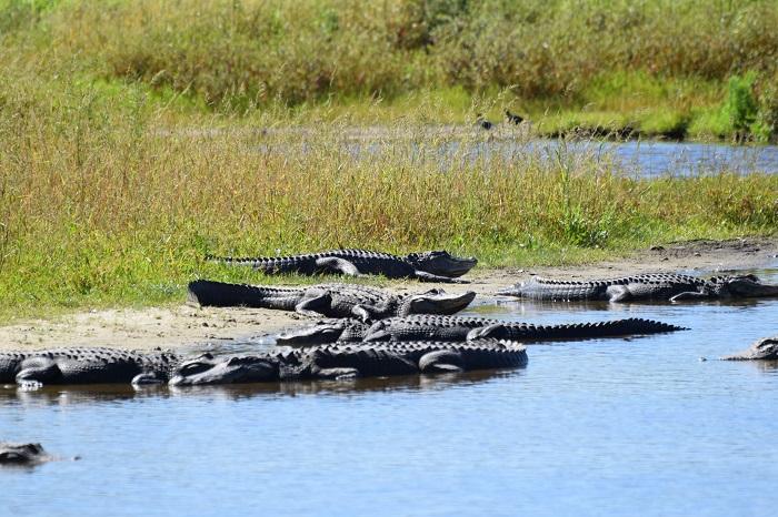 Myakka River State Park. Florida. FitlifeandTravel.com