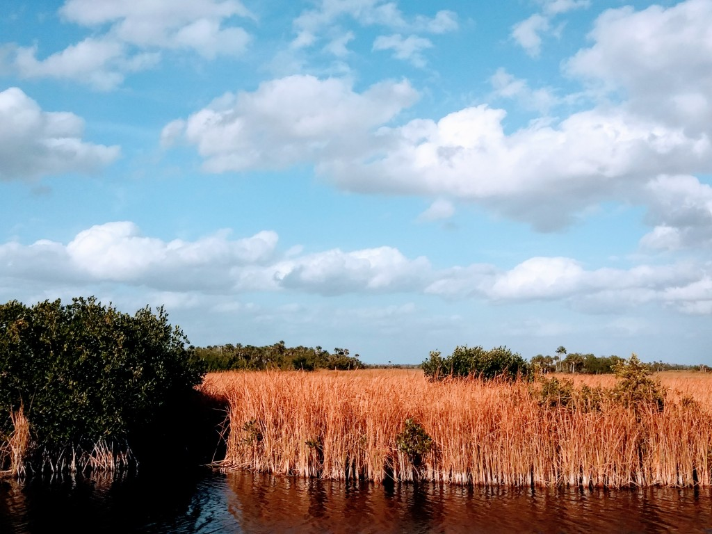 Big Cypress National Preserve saw grass prairie