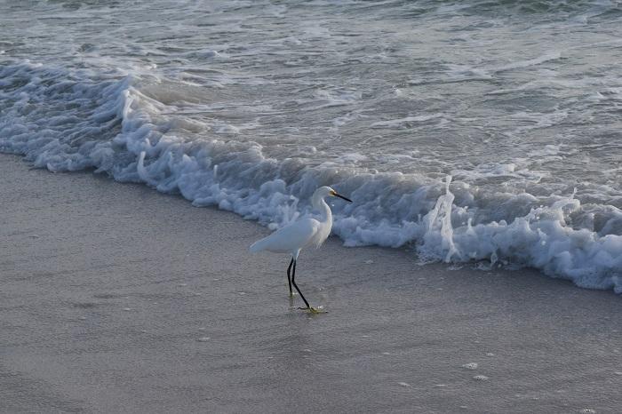 Siesta Key Beach, FL. FitlifeandTravel.com