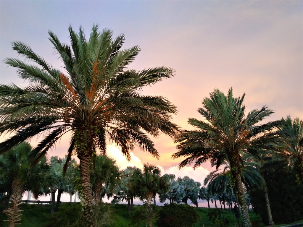 The Best Adventures of Fun, Sunsets and Shopping in Sarasota!