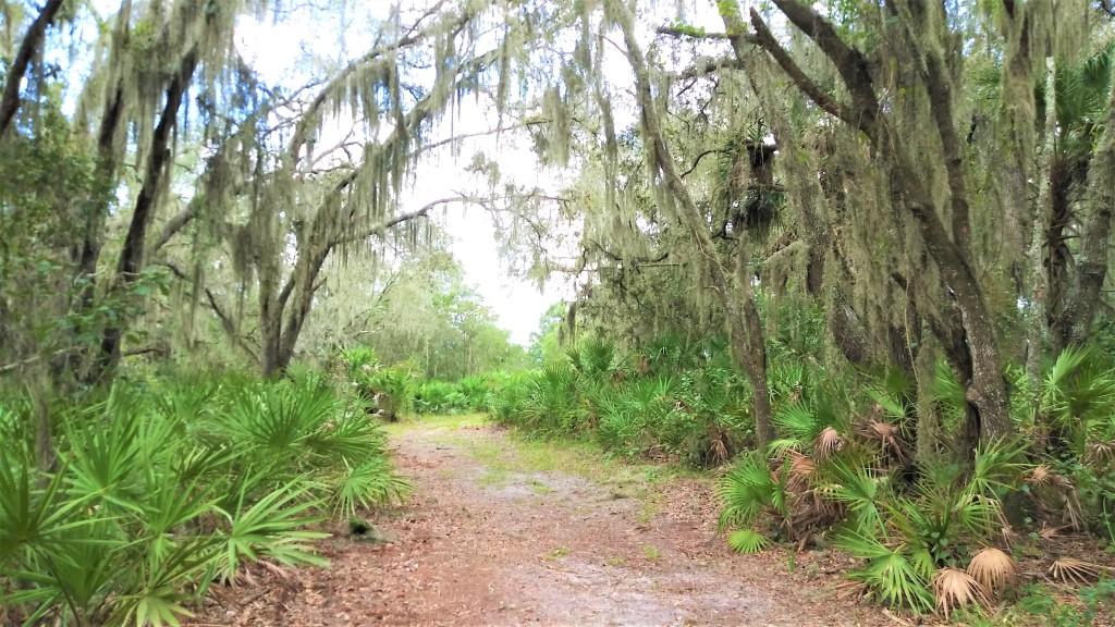 Old Florida. Hiking trails.
