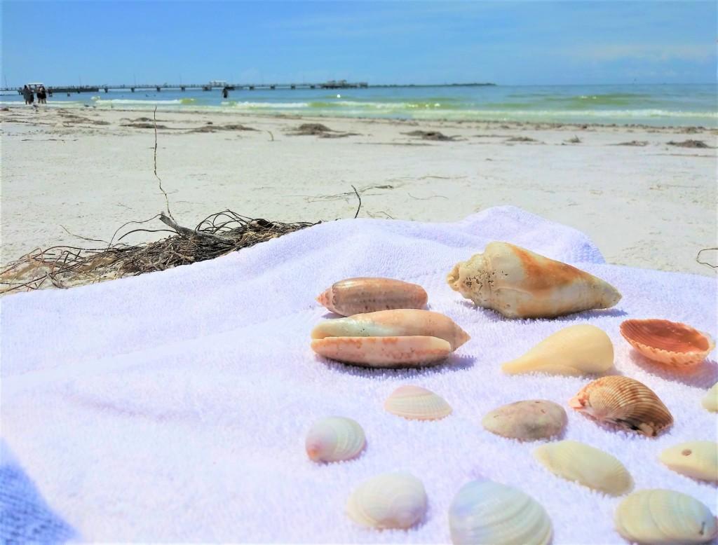Shells. Fort De Soto Beach, Florida. FitlifeandTravel.com