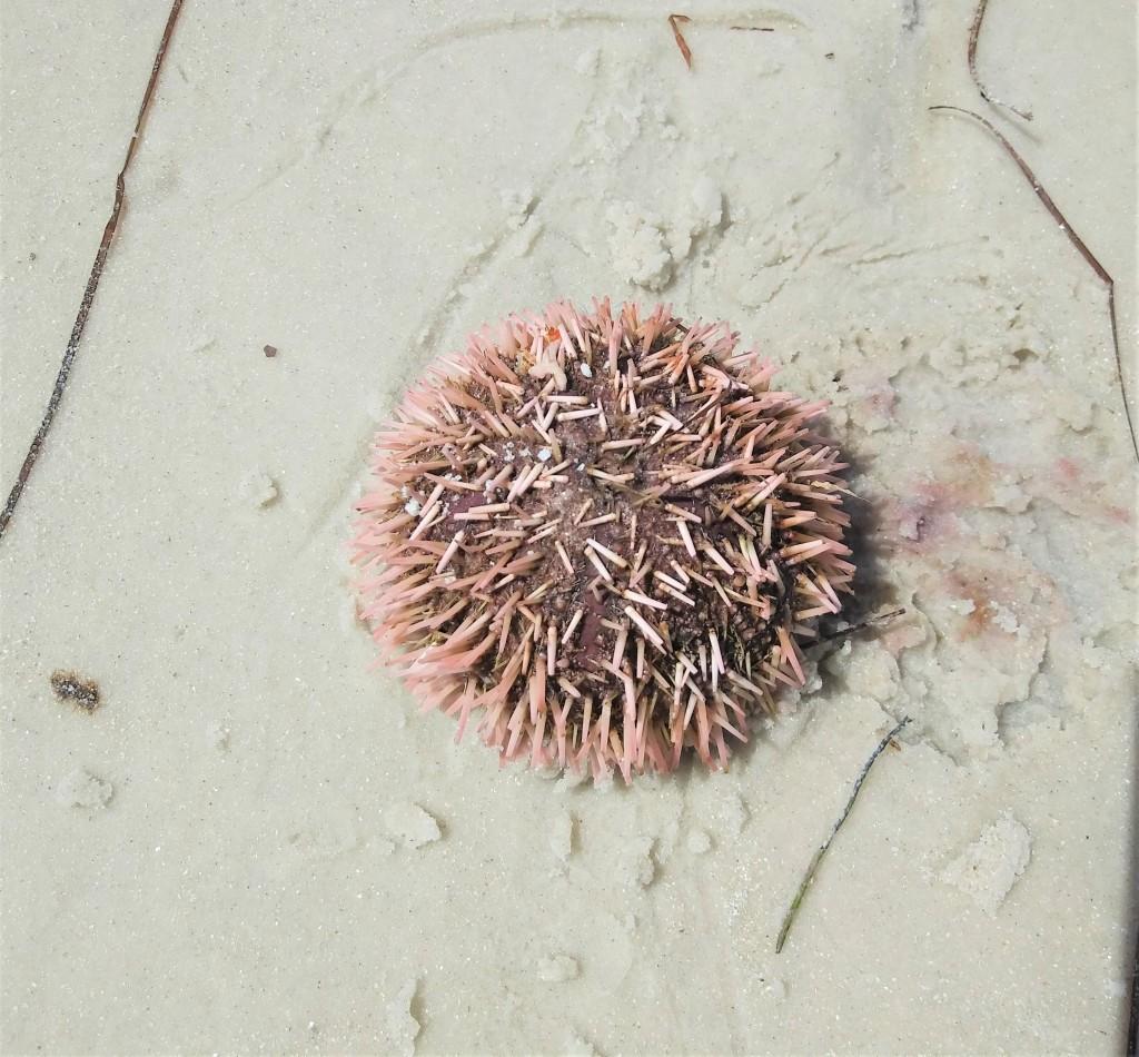 Shelling For Sea Treasures At Fort De Soto, Florida. FitLifeandTravel.com