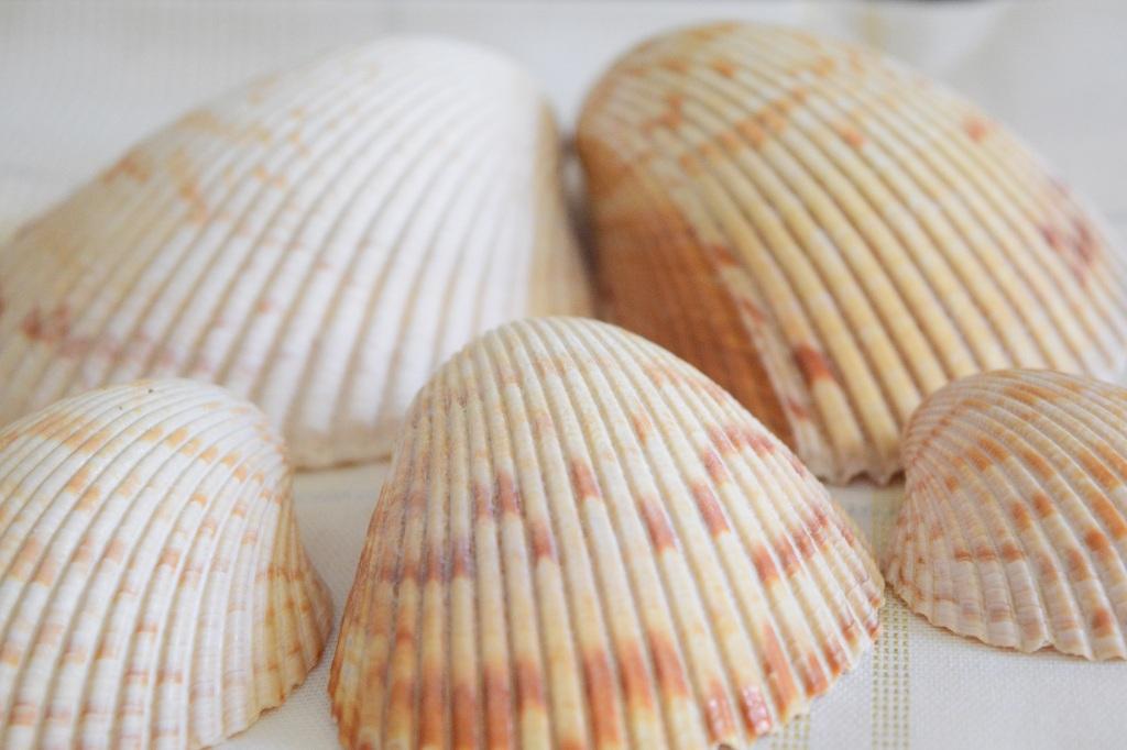 Cockle Shells. Shell Key, FL. Fitlifeandtravel.com