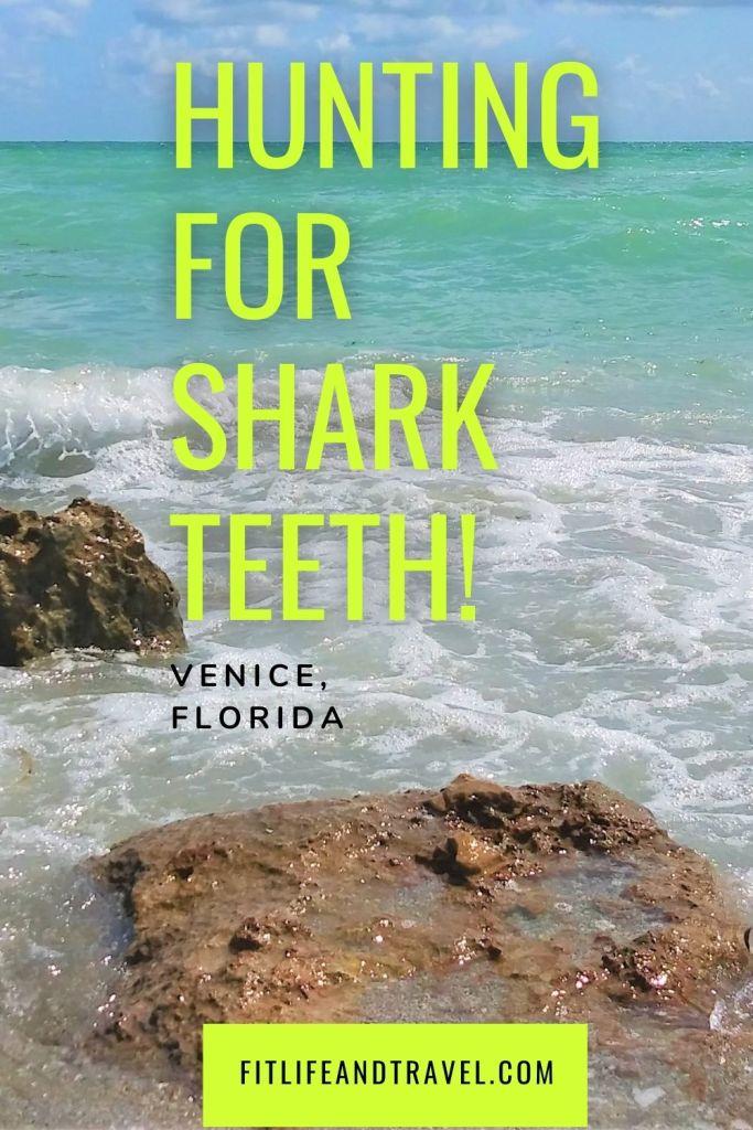Hunting for Shark Teeth. Pinterest. Fitlifeandtravel.com