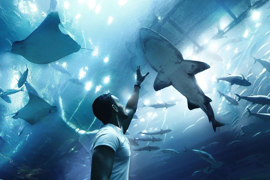 Dubai Aquarium and Underwater Zoo. FitLifeandTravel.com