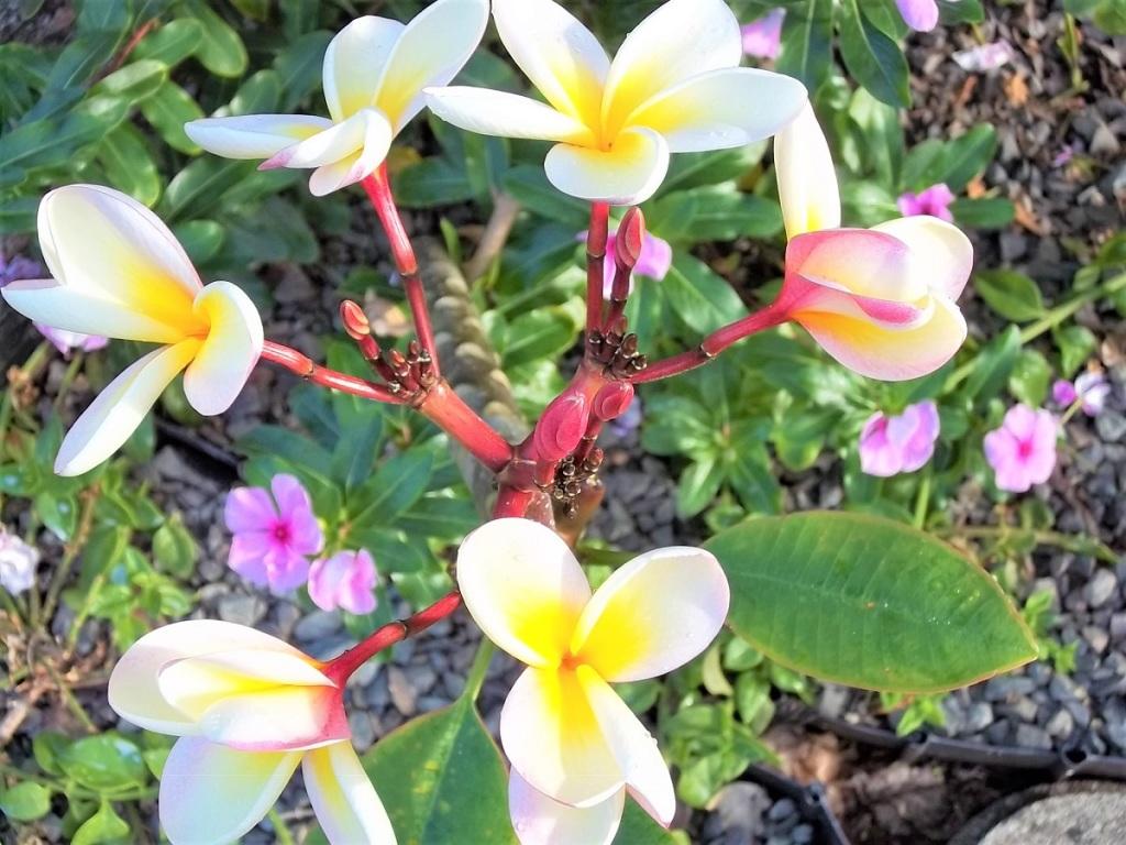 Hawaii tropical plants and flowers