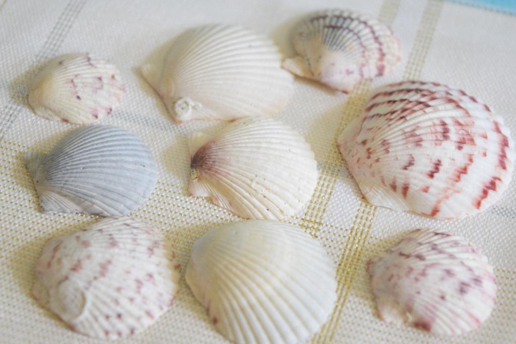 Lots of sea shells at Venice Beach.