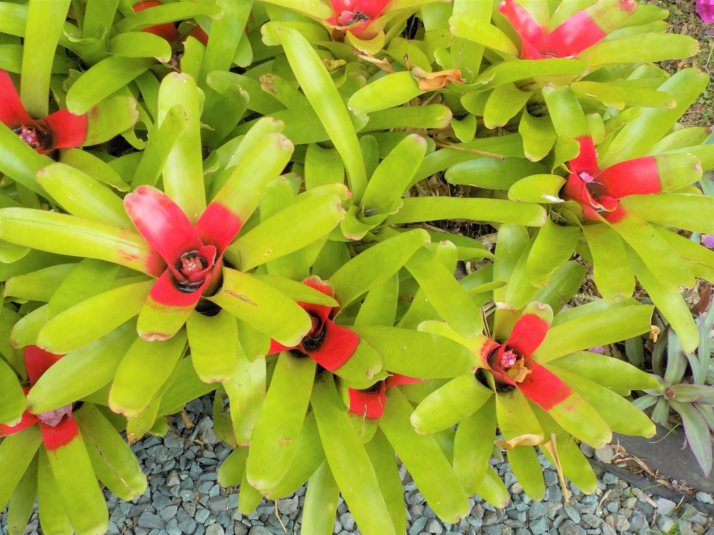 Tropical plants and flowers from Hawaii